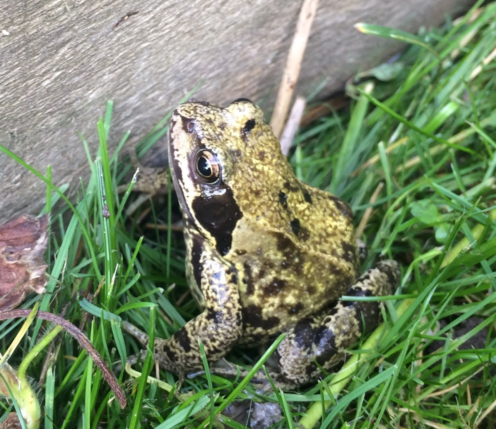 I often see frogs in the garden